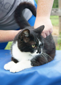 Chiropractic care can benefit animals.